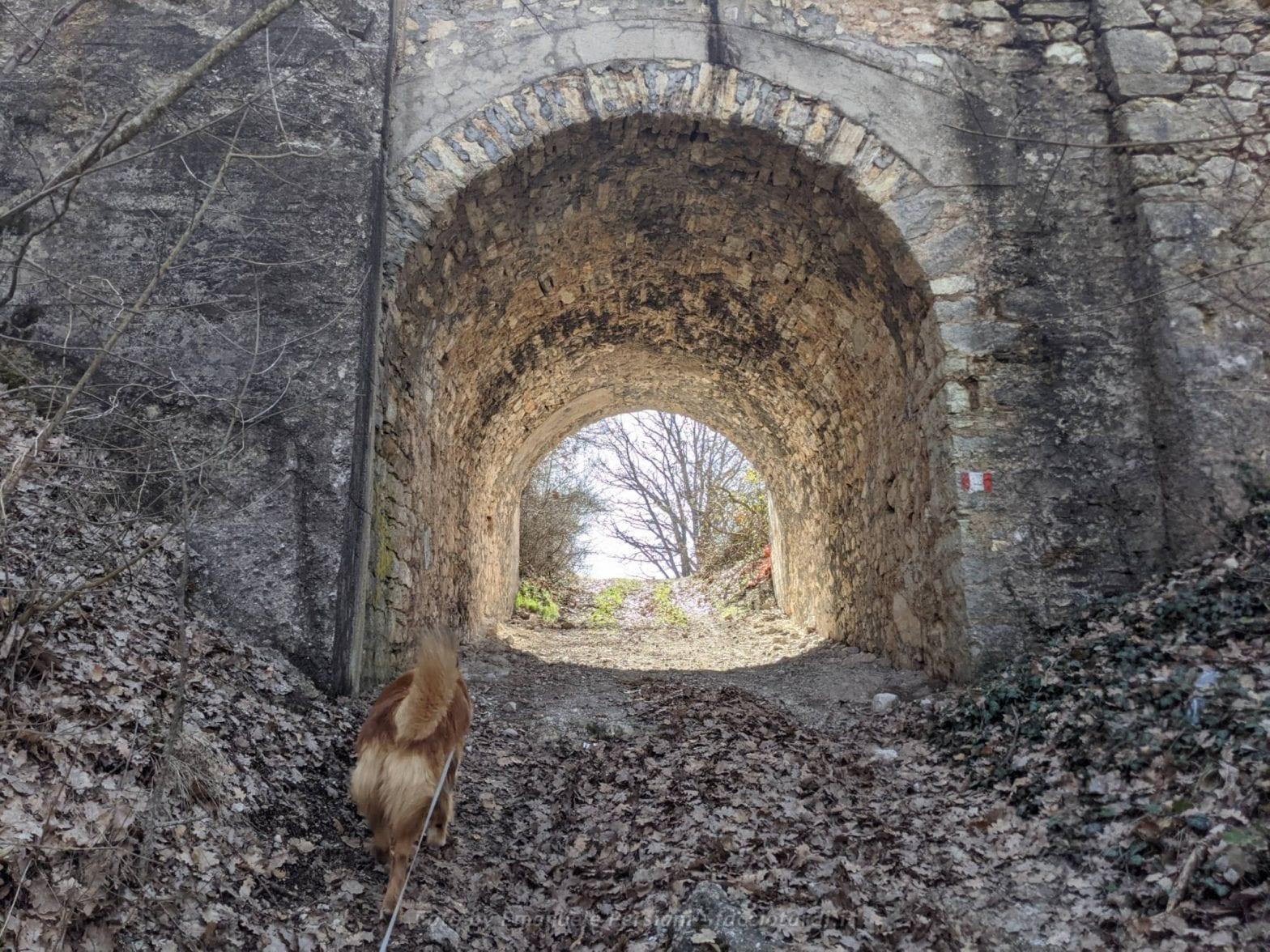 Passeggiata ad anello Valle di Santa Scolastica con cane